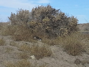 Feral cat hiding in vegetation south of Colorado Springs