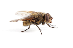 House Fly Removal
