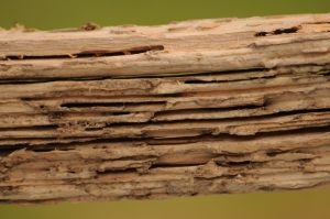 Termite Damage Wood