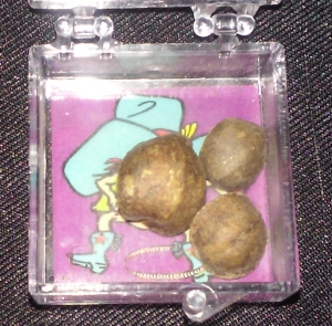 Mexican Jumping Beans are commonly sold as novelty items in stores.