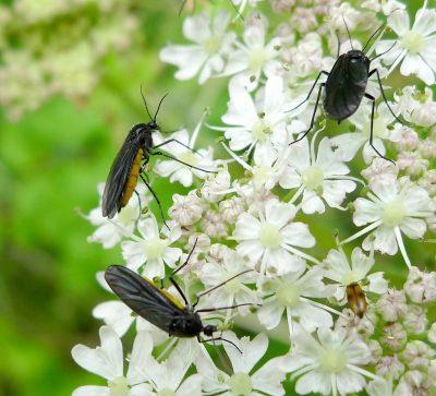 Understanding Colorado Fungus Gnats - Biting Flies
