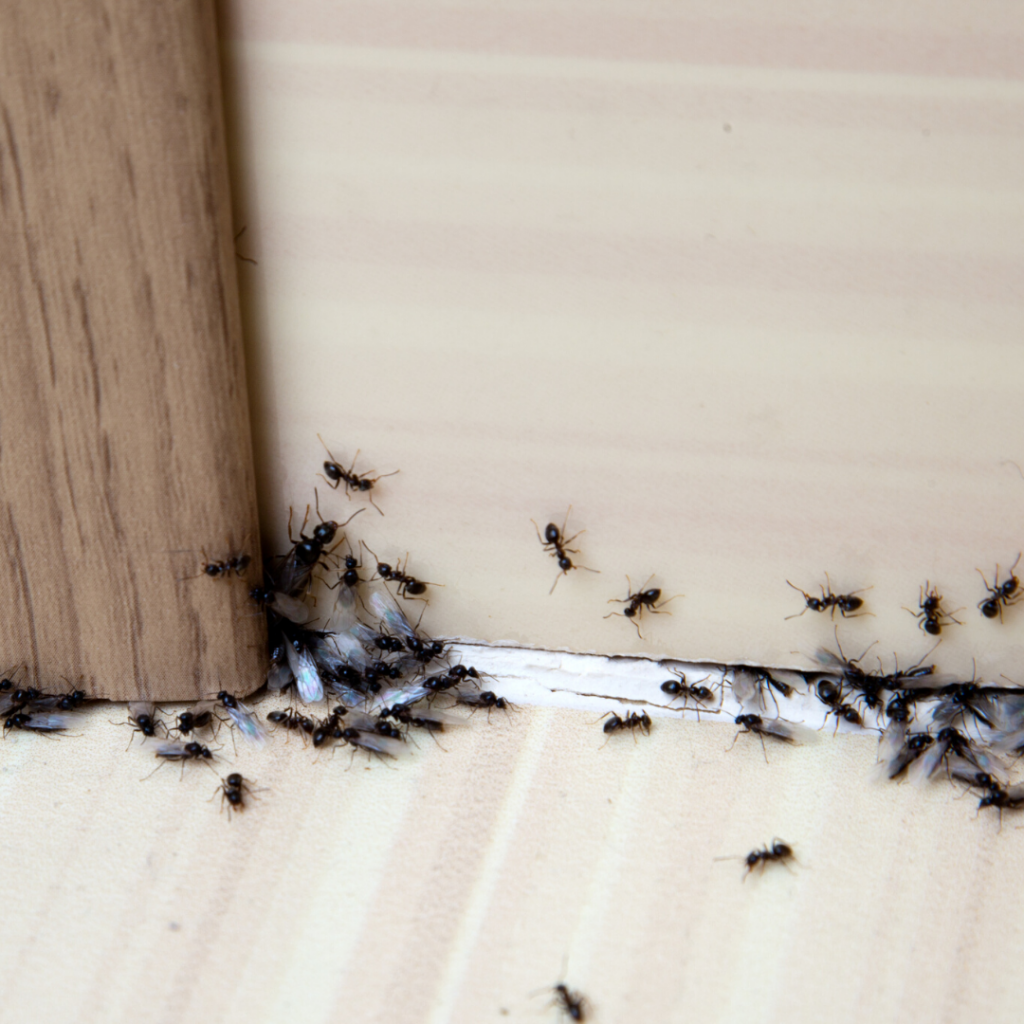 6 tips to Prevent Ants Colorado Springs