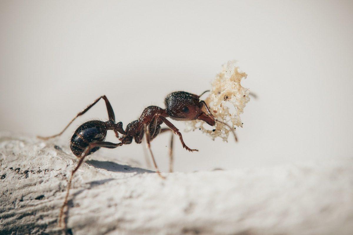 pest control education