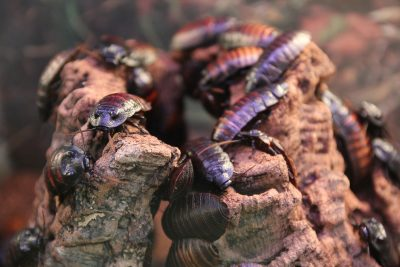Cockroaches and diseases in your Colorado Springs home