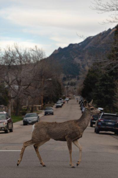Wildlife Control Near Me