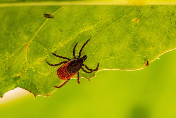 eliminate fleas and ticks from your home
